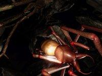 Má to osm nohou a mnoho očí - co to je? Arachnoid VR