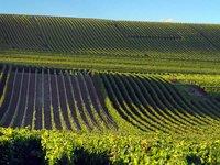 Plody této francouzské vinice budete ochutnávat :)