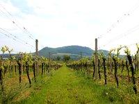 Moravské vinice jsou prostě nádherné.