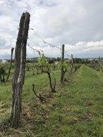 A již 30 let tu vína vyrábí také rodinné vinařství Kraus.