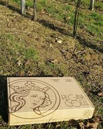 A od roku 1991 tu vína vyrábí ve vinařství Trpělka & Oulehla.