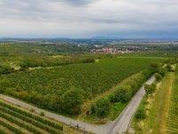 Ve vínu ochutnáte vždycky i kousek kraje, kde se réva pěstuje.