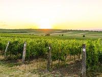 Na Moravě zraje to nejlepší zemské víno.