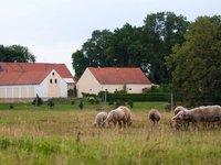 Ovce je potřeba každý den vyvést na pastvu.
