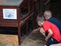 Péče o zvířata je vhodná i pro děti.