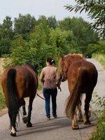 Koním je potřeba protáhnout nohy.