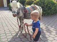 Děti mohou zkusit i jízdu na poníkovi.