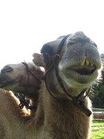 Mohamed a Šajtan se těší na vaší návštěvu :)
