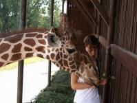Pavilon žiraf