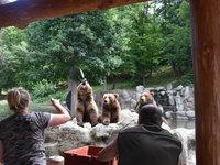 Na krmení medvědů jen tak nezapomenete