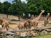 Kdo by nechtěl nakrmit žirafu:)