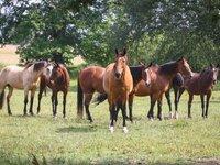 Obdivovat můžete i místní koně.